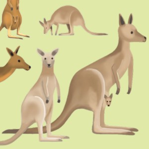 Kangaroos T-Shirt Design Highlight